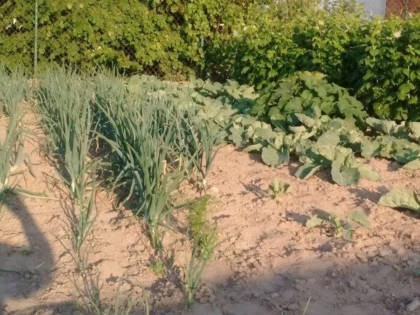 warzywniak na wsi